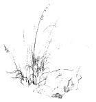 GrassDB131