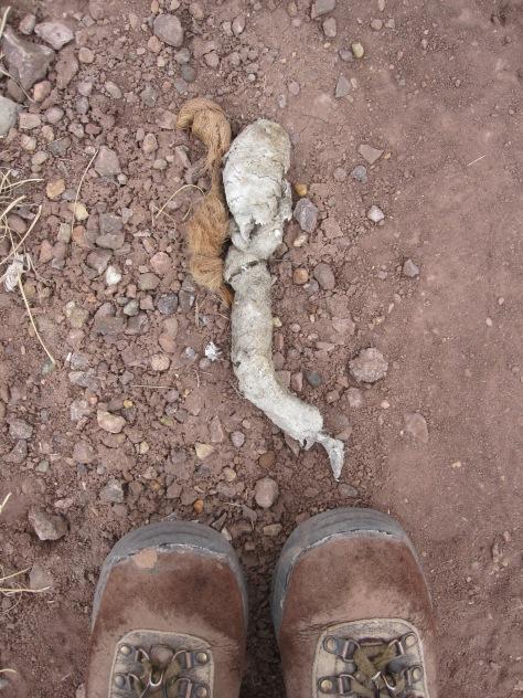 Boots Sync lion poop